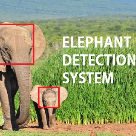 Automated Elephant detection using TensorFlow